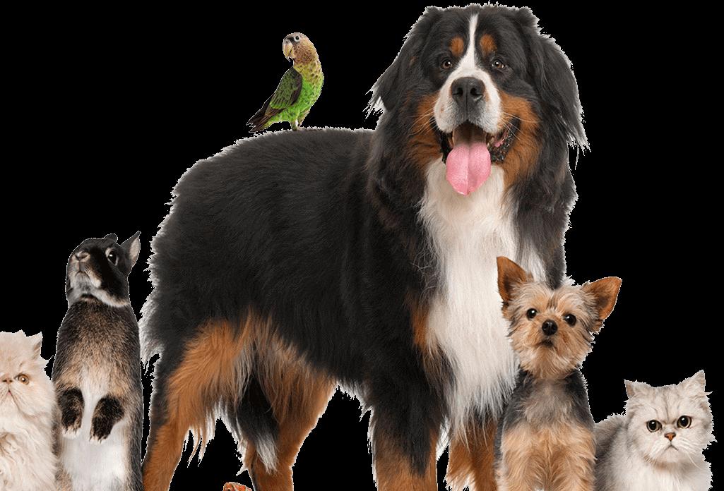 pets (1) (1)